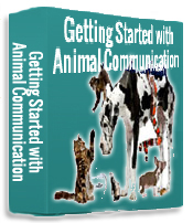 Nancy Windheart Animal Communication