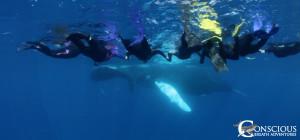 monday-am-gene-whale