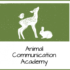 animal communication academy