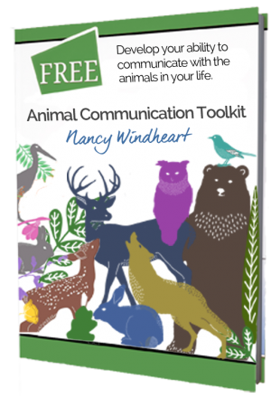 Animal Communication Training Tools Book Cover