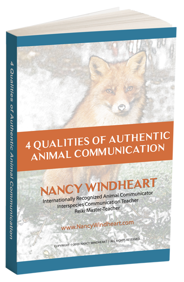 4-qualities-of-authentic-animal-communication