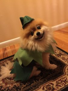 dogs-in-costumes
