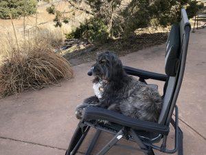tashi-joy-afghan-hound