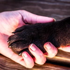 dog-paw-300×300