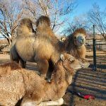 Arizona Animal Communication Workshop