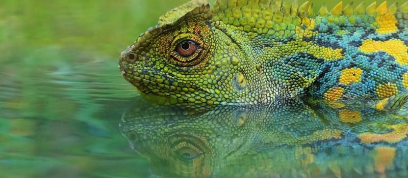 love-lizards